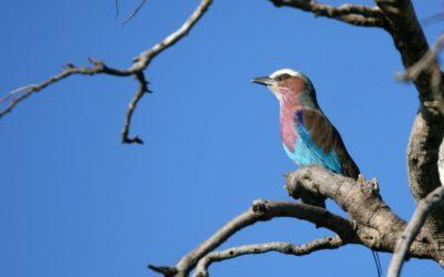 Biodiversité, les chants des possibles